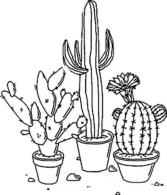 sticker tumblr aesthetic png cactus plant blackandwhite. Black Bedroom Furniture Sets. Home Design Ideas