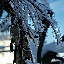 photography myphoto winterwonderland unedited