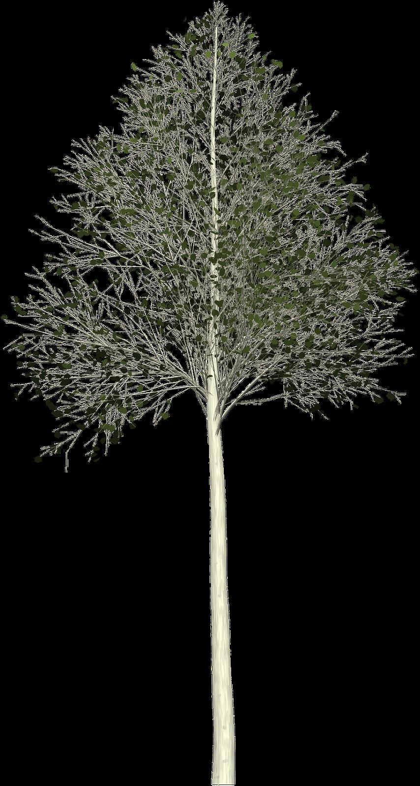 #FreeToEdit #ftestickers  #tree