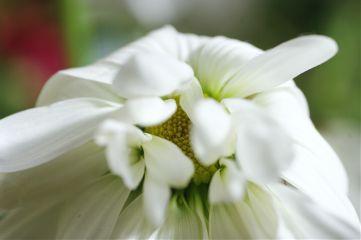 flower flowers flowerphotography flowerporn bokeh