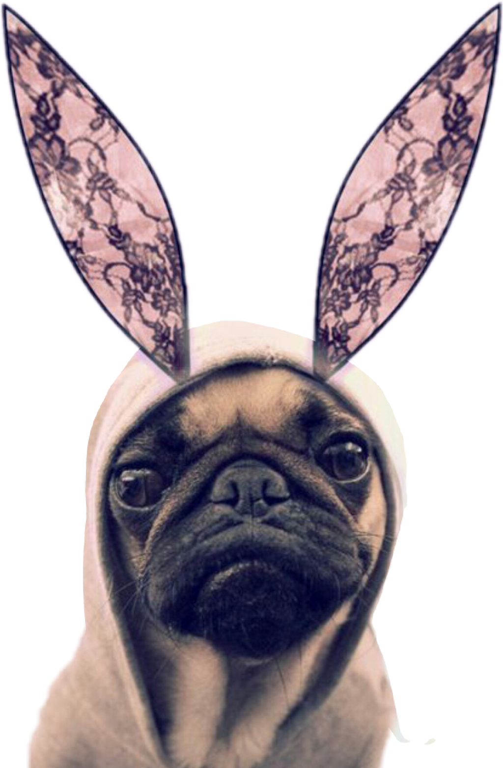 #dogstickers #ftestickers