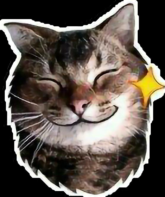#cat #shine