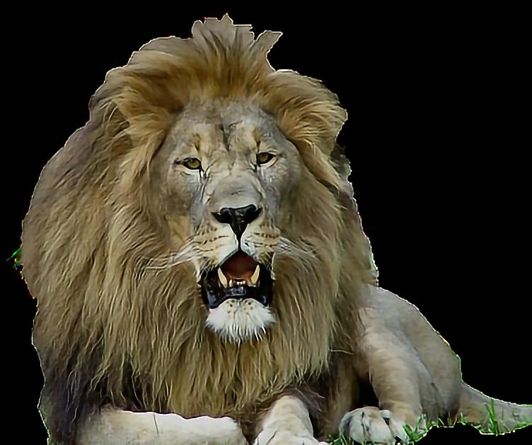 #sticker #freetoedit #lion