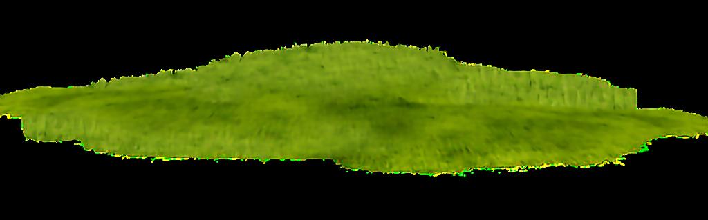 #plant#bush#grass#flower