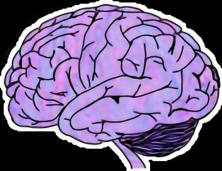 #brain #Tumblr
