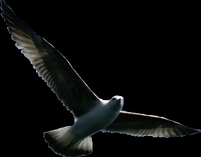 #bird #vogel #möwe