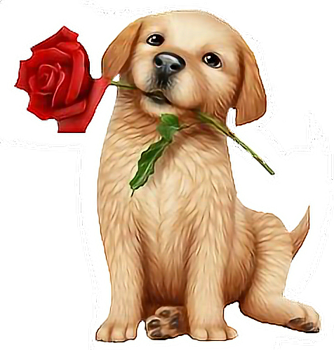 #puppywithrose #freetoedit