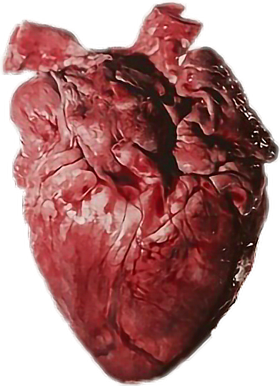 Human Heart Nature Careers