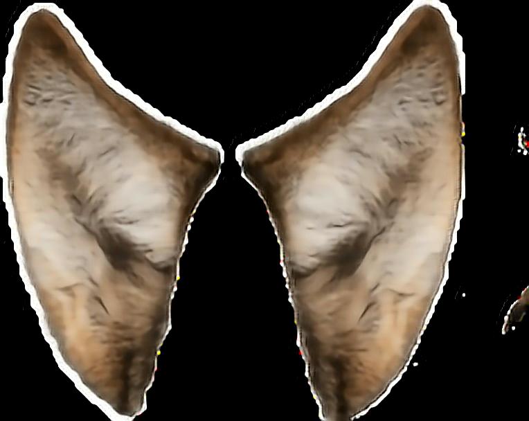 #dog #wolfears #body  #ftestickers #ears #puppy  #coyote #werewolf #vampire #canine  #horror #creepy  #makeupselfie  #costume #bodyparts #animalstickers #photomanipulation #photomanip  #halloween